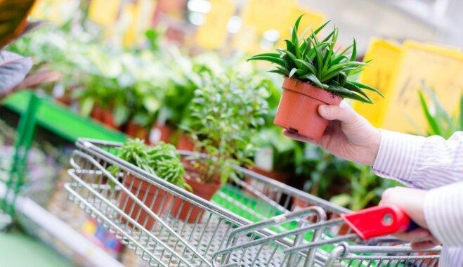Košs dārziņš stikla traukā: kā pareizi stādīt augus terārijā