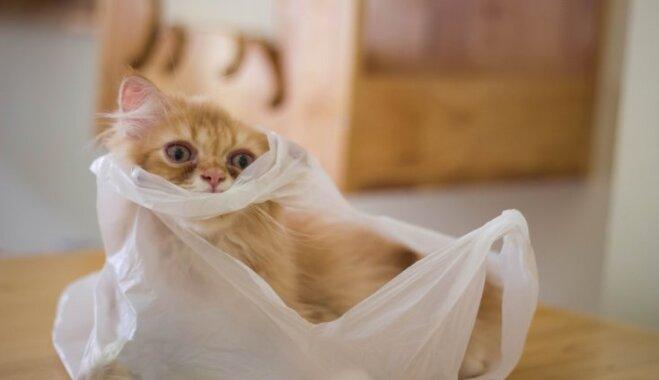 Foto un video: Kaķi plastmasas maisiņos – ikdiena katra saimnieka dzīvē