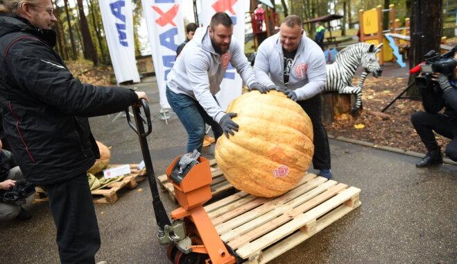 ФОТО. Самая большая тыква в Латвии в этом году весит 161,5 килограмм