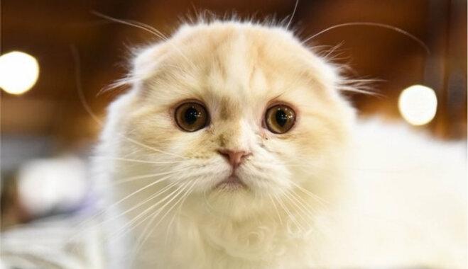 Kaķi Ķīpsalā pirmo reizi leks pāri šķēršļiem un piedalīsies adžiliti sacensībās