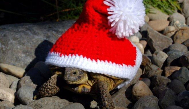 Oriģināls veids, kā izrotāt savu bruņurupuci