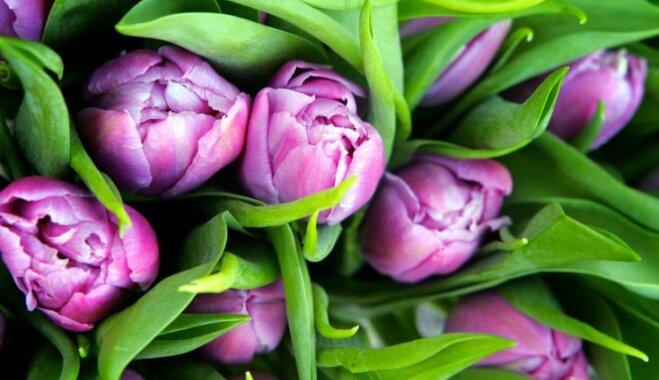 Опрос DELFI Woman: Идеальное 8 марта