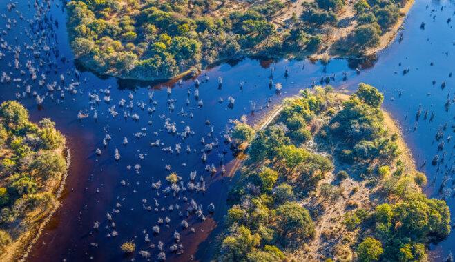 Повыть с собакой Баскервиллей: Топ-6 лучших болот мира и кто там обитает
