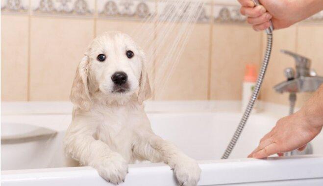 Уроки Мойдодыра. Как часто вы должны чистить и мыть все в доме