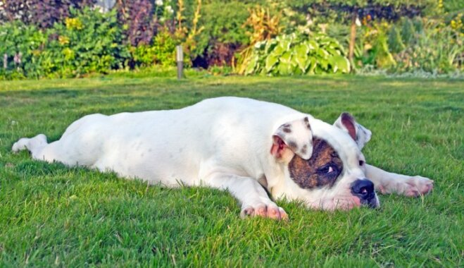 Suns un svelme: ko dzīvniekam var nodarīt karstums un kā no tā izvairīties