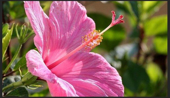 Dārza puķes, kas šogad modē