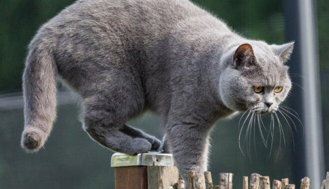 Cīņa ar grauzējiem mājās un pagalmā – joprojām efektīvākais ir kaķis