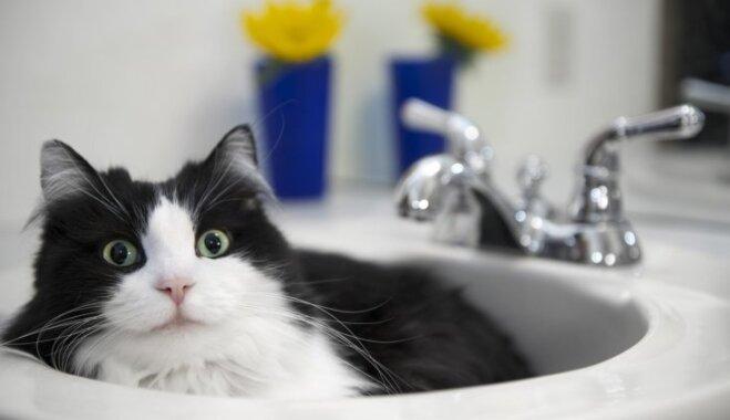 Kāpēc kaķis seko saimniekam līdzi uz vannasistabu