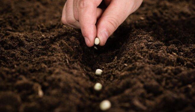 Sējas laiks! Ieteicamie dārza darbi no 16. līdz 23. aprīlim