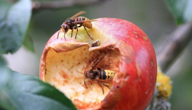 Почему мы любим пчел и ненавидим ос? Справедливо ли это?