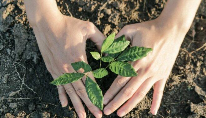 Mulču izmantot pat siltumnīcās – kā izglābt augus no sausuma radītajām sekām