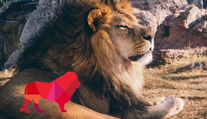 Рассказывают звезды: типичный Лев и что от него ожидать