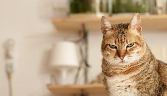 10 profesijas, kas kaķiem padotos labāk nekā cilvēkiem