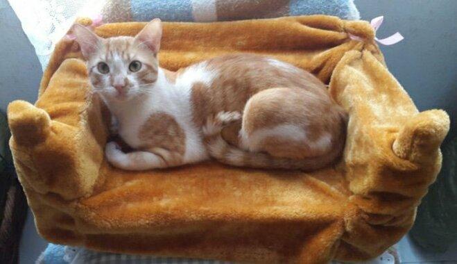 Ceļojums ar četriem kaķiem jeb Kā Zane no Kanāriju salām uz Latviju mīluļus plāno vest