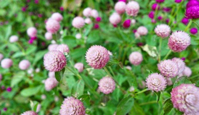 12 лучших однолетних растений, которые не боятся яркого солнца