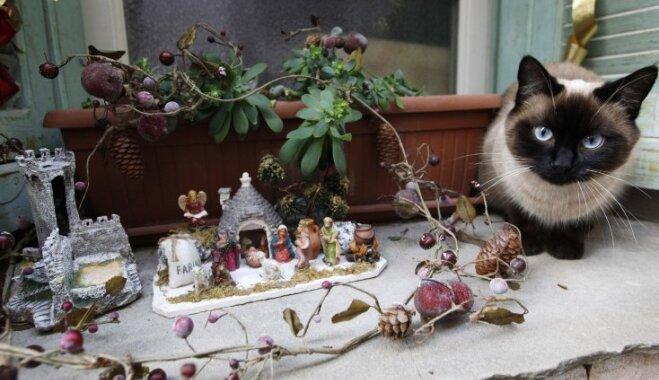 Почему коты так любят портить рождественские ёлки