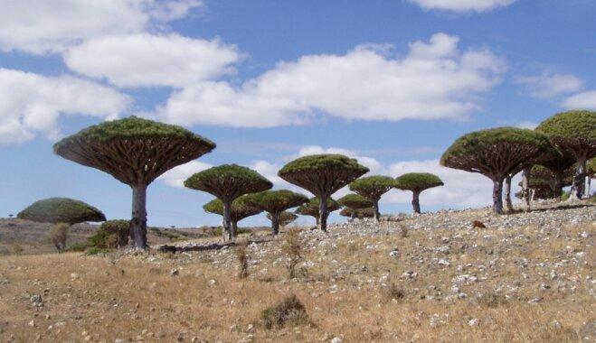Savdabīga ainava vai spocīga atmosfēra: neparastas salas, kas vilina tūristus
