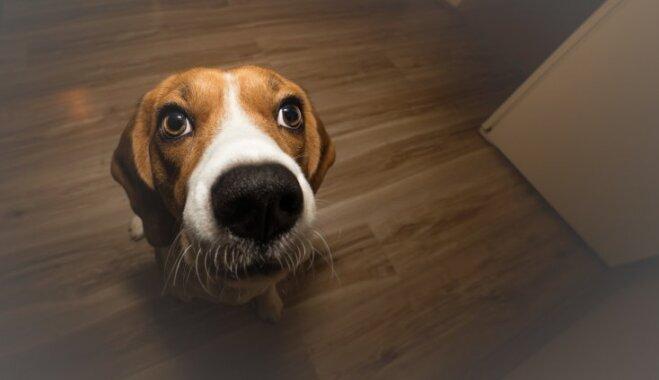Дорогие домашние любимцы. Сколько стоит собака или кот - с точки зрения латвийских законов
