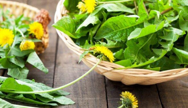 Sezonas produkts – pienene: ieteikumi, kā veselīgo nezāli iekļaut ēdienkartē