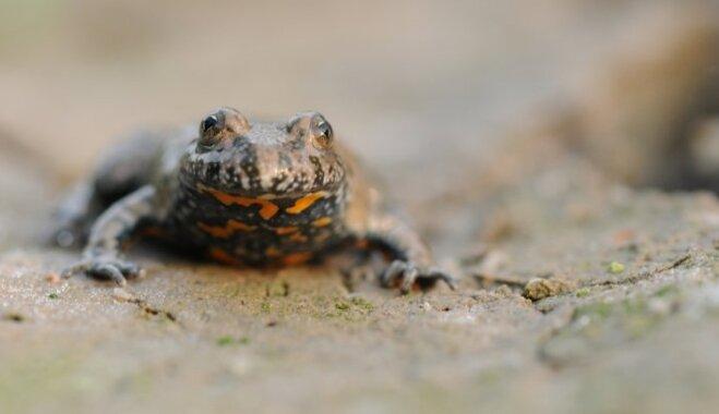 """Ваша """"жаба"""" одобряет: Топ-9 Hi-Tech вещей, от покупки которых лучше воздержаться"""
