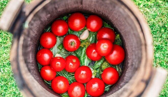 Соленые помидоры, начиненные зеленью и чесноком с хреном по-грузински