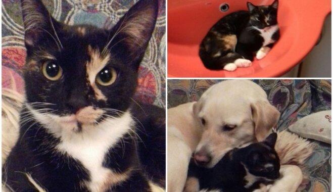 Veiksmes stāsts: Vangažos atrastā Leksiņa, kurai patīk lēkāt un spēlēties ar suni