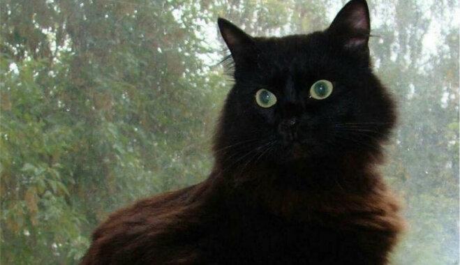 Meklē mājas kaķim, kas dzīvo uz ielas un ir draudzīgs pret cilvēkiem