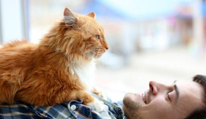 Kaķu saimnieku ikdiena: kā mīluļi izrāda pieķeršanos cilvēkam