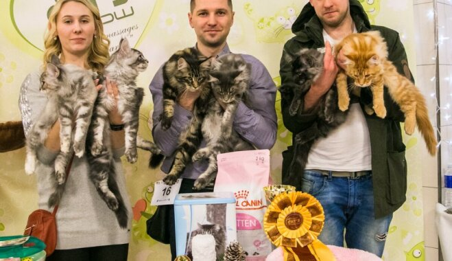 В Rīga Plaza пройдет выставка всемирно признанных котов