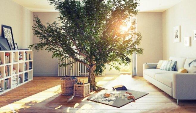 Energoefektīvs mājoklis un videi draudzīga dzīvošana mājā – ko tas nozīmē