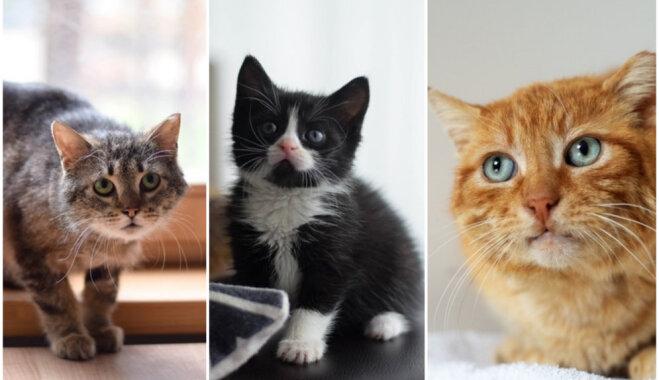 Vajadzīgs vien saimnieks – mājas meklē pieci dažāda vecuma un dzimuma kaķi