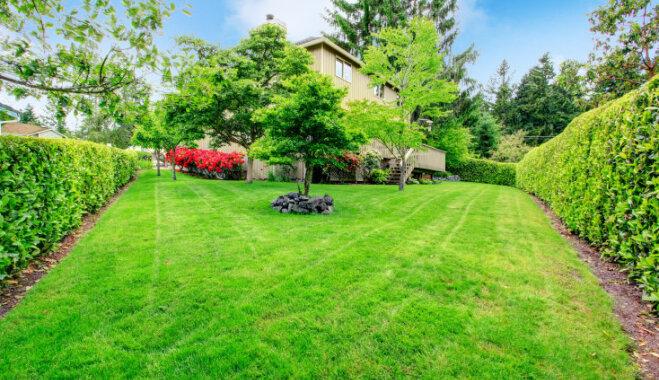 Нужно ли снижать высоту деревьев в саду и чем это поможет?