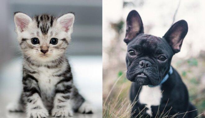 Reiz tāds bija katrs mīlulis: mīlīgu kucēnu un kaķēnu fotoizlase