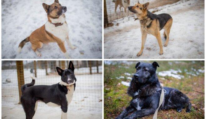 Dzīves sākums pavadīts pie ķēdes. Mājas meklē četri suņi, kas gatavi atvērt sirdi cilvēkam