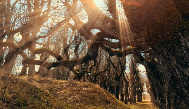 Iespaidīgā liepu aleja Katvaros jeb Kur meklēt 'Billes' mežu