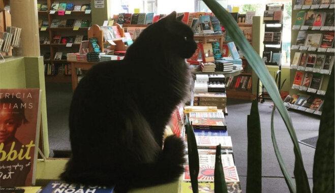 Runcis Spaiks jau 11 gadus dzīvo grāmatnīcā