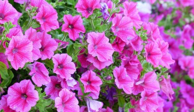 Фото цветов в аск 60