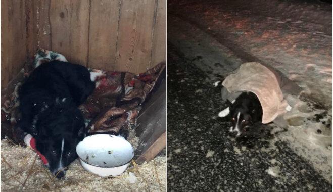 Aicina atsaukties uz Mālpils ceļa notriekta suņa saimniekus