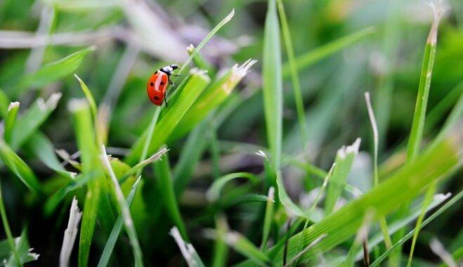 Каннибализм, зомби и квакающие пчелы: 13 странных фактов о жуках, гусеницах и других насекомых