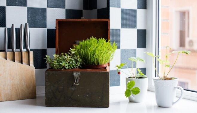5 растений, которым понравится у вас на кухне