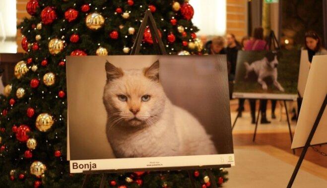 Foto: Iespēja noskatīt jauno mīluli – atklāta izstāde 'Es arī gribu pavadīt Ziemassvētkus mājās'