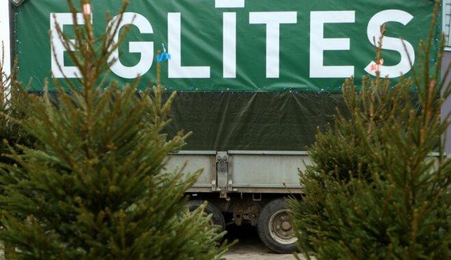 Ziemassvētku eglīšu cenas Rīgas Centrāltirgū svārstās no diviem līdz 20 eiro