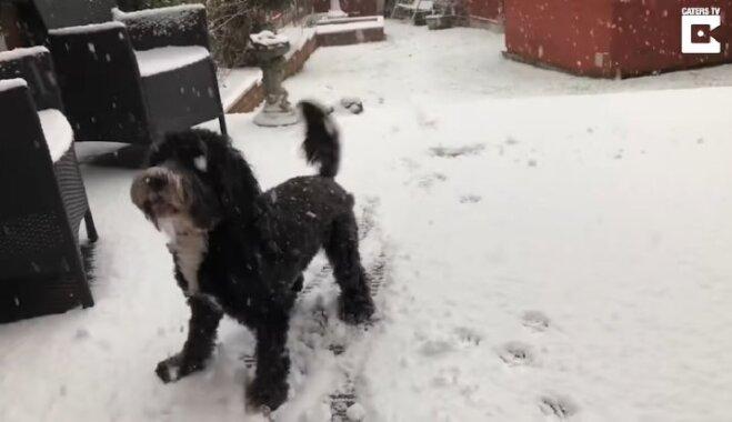 Aizkustinošs video: Suņuks neviltoti priecājas par sniegu