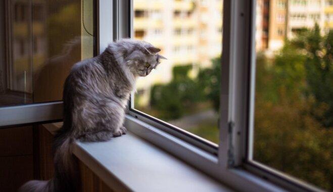 Cenšoties izprast kaķa dabu: skaidrojumu ābece mīluļa niķiem un labsajūtai