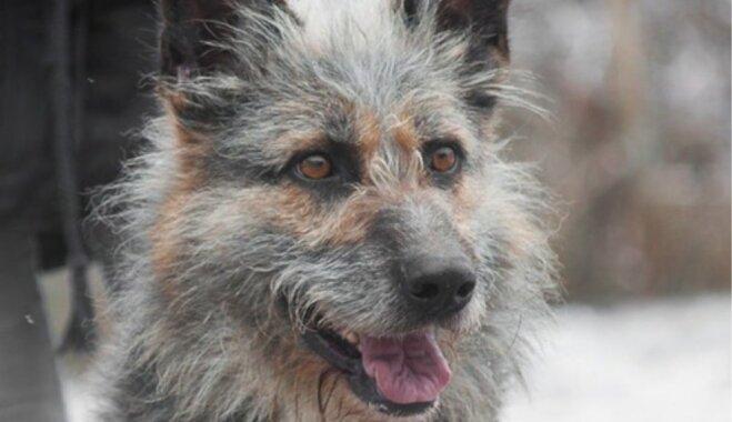 Seši mīluļi, kuri savu saimnieku gaida dzīvnieku patversmē Rēzeknē