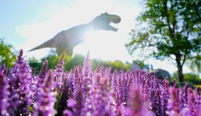 """ФОТО. """"Лазертаг"""", динозавры для взрослых и водные катамараны - """"Аварийная бригада"""" увеличивает количество аттракционов"""