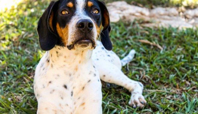 Nesargās māju, siekalosies un izaugs par milzi – suņu šķirnes dažādiem saimniekiem