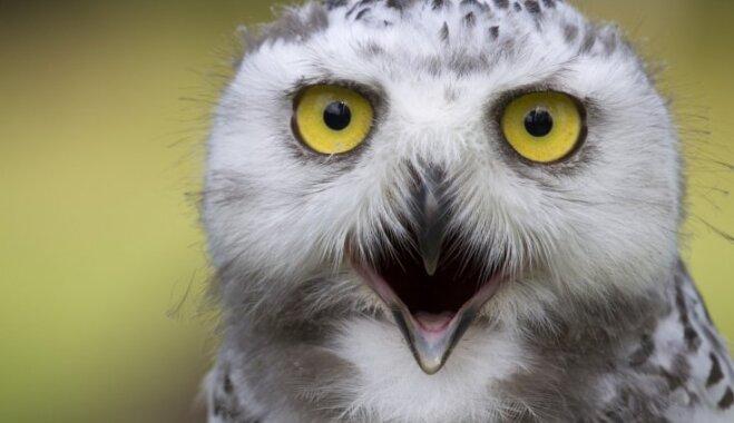 Завтрак в компании хищных птиц: в Италии открылось необычное кафе