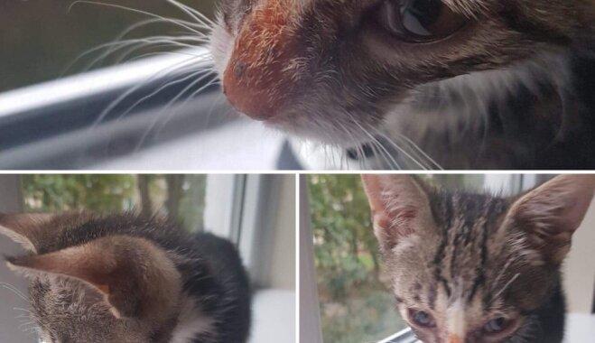 Vajadzīga mīlestība un rūpes – vairāki kaķēni gaida savu jauno saimnieku