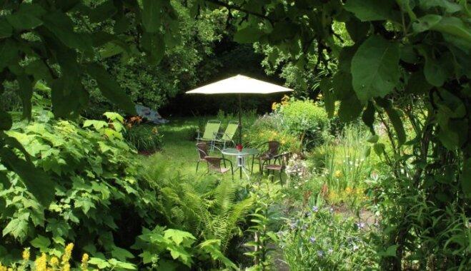 Dārzs, kur viss nepareizais ir pareizs: Ilzes Reihas džungļu oāze Vecaucē